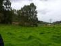 Vendo finca en Ubate para ganaderia de 9 fanegadas planas y 8 semiplanas 3 nacimientos de agua cabaña