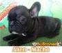 Hermosos Bulldog Francés en venta de CRIADERO BULLCANES