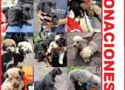 URGENTE, ADOPTA MASCOTAS, Perros, Gatos, Recibimos Donaciones. El REFUGIO pasa hambre, AYUDANOS.  URGENTE DONAR ALIMENTO para 17 gatos y 120 perros, NO SON DE RAZA. Todos fueron abandonados en Bogotá