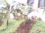 pintura reformas plomeria jardineria y oficios varios