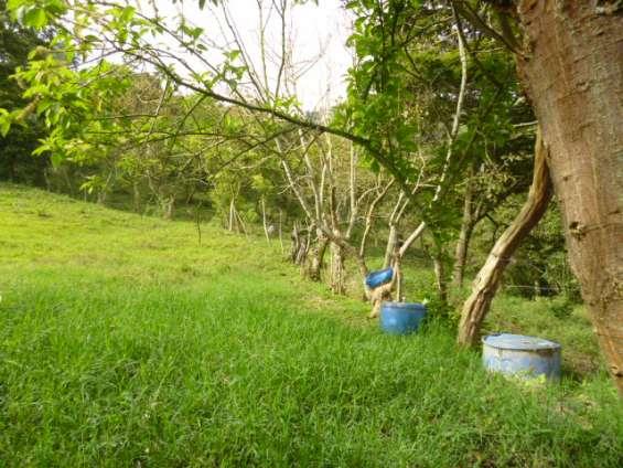 Fotos de Se vende finca en girardota vereda jamundi. 3