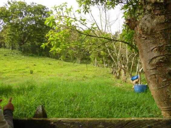 Fotos de Se vende finca en girardota vereda jamundi. 2